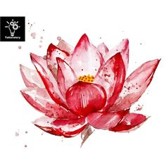 Pink lotus watercolor illustration isolated on white background. Hand painted l… Pink lotus watercolor illustration isolated on white background. Flower with watercolor splashes, stains. Lotus Kunst, Lotus Art, Pink Lotus, Lotus Drawing, Drawing Flowers, Lotus Flowers, Fake Tattoos, Flower Tattoos, New Tattoos