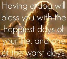 Dog Quotes Love, Dog Sayings, Elmo, Baby Dogs, Dogs And Puppies, Papillion Dog, Pet Grief, Really Cute Puppies, Dog Heaven
