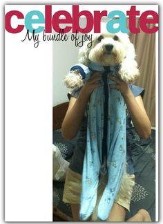 Only when a Bichon is tired can you can play doll-Bichon-up