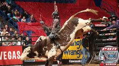 Professional Bull Riders - Newman hangs tough. June 17, 2016. Nevada Newman is currently No. 24 in the world standings. Bismarck, ND. Things only got tougher for Newman as he was then bucked off by Smooth Operator in 1.49 seconds in the 2015 World Champion Bull contender's first action in seven months. Also, in this article, get the scoop from Chad Berger on SMOOTH OPERATOR on his take of the bull this evening.
