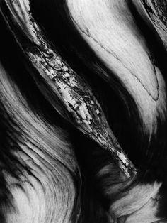 Wood Photographic Print by Brett Weston at Art.com