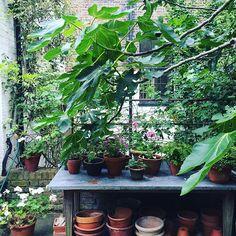 Nigel Slater's garden