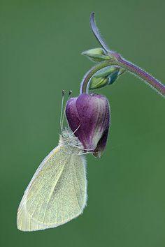 Butterfly / si una parte se siente muy bien, solo falta mi Bfly para estar completo...