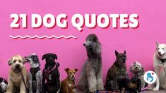 21 Striking Dog Quotes To Inspire You Shelter Dogs, Rescue Dogs, Crazy Dog Lady, Bichon Frise, Dog Quotes, Dog Mom, I Love Dogs, My Favorite Things, Inspirational Quotes