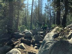 Check out our South Lake Tahoe Mountain bike guide. Toad's Wild Ride (Saxon Creek) Best Mountain Bikes, Mountain Style, Mountain Bike Trails, California Places To Visit, Alpine Meadow, Trail Guide, South Lake Tahoe, Cross Country Skiing, Relentless