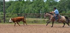 'Cielo' is your guy if you're in the market for a ranch horse that has competition experience, too!