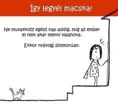 294 Így legyél macska!   Tippek és ötletek kezdő cicusoknak Ecards, Memes, Fun, E Cards, Meme, Hilarious