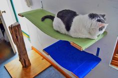 Cat Shelf, Cat Hammock, 35 inch Convertible Soft Top Wall Hammock For Your Curious Cats by HammockHavens on Etsy https://www.etsy.com/listing/223061277/cat-shelf-cat-hammock-35-inch