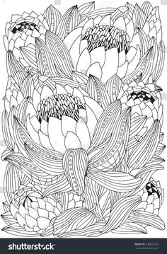 Coloring book page for adult and children. King Protea in zentangle style. Black and white colors. Adults coloring book page in vector. Protea Art, Protea Flower, Waratah Flower, Flower Background Wallpaper, Flower Backgrounds, Coloring Pages To Print, Coloring Book Pages, Art Floral, Black And White Illustration