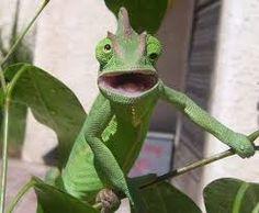 Resultado de imagen de animales graciosos 2015