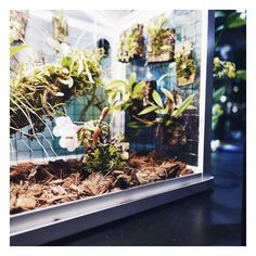 Dzis odwiedziłam Targi Storczyków które odbywają sie właśnie w BUW. Coś niesamowitego - istne storczykowe szaleństwo. Co więcej było też kilka naprawdę inspirujących motywów - jak np. ten mikrokosmos w mini szklarni. No mowię Wam odlot  . .  #storczyk #floral #kwiaty #rośliny #plants #microcosmos #florist #orchids