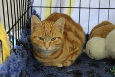 Found Cat approx 6 months old, found mount maunganui, friendly but scared at the moment. Please contact us if you are missing this cat