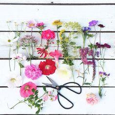 Pretty #crafttherainbow flowers from @mitkrearum