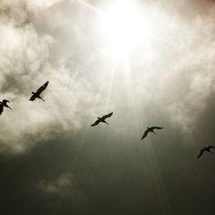 birds....imagine that.