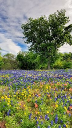 pring-fence-field-flowers-landscape-nature-wildflowers-