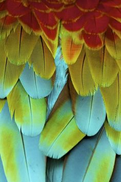 """earth-song:    """"A rainbow of feathers. """" by Nate Cooper"""