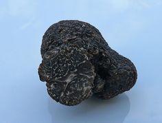La truffe noire.