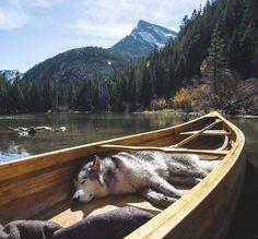 Loki The Wolfdog Marble, Colorado, United States Loki, Husky, Fluffy Dogs, Alaskan Malamute, Outdoor Dog, Outdoor Life, Outdoor Living, Mountain Man, Camping Life