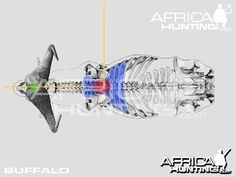 Grands gibiers africains - Le blog de Alex.bowhunter Africa Hunting, Impala, Sci Fi, Elephant, Pose, Badger, Dog, Game, African