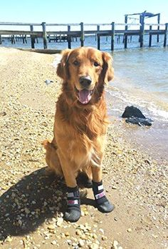 All Weather  Dog Boots with Reflective Velcro Straps       >>>>> On SALE   http://amzn.to/2bXzBPa