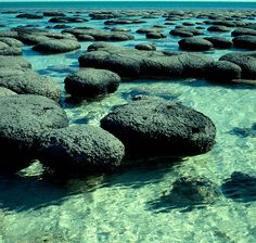 Stromatolites, Shark Bay - remarkable, these filter air and produce oxygen - Native Spirituality says an example of the alive and intelligent aspects of Earth Western Australia, Australia Travel, Wonderful Places, Beautiful Places, Amazing Places, Places To Travel, Places To See, World Heritage Sites, Amazing Nature
