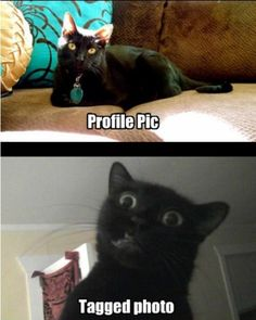 Page 4 of 714 - LOLcats is the best place to find and submit funny cat memes and other silly cat materials to share with the world. We find the funny cats that make you LOL so that you don't have to. Funny Animal Pictures, Best Funny Pictures, Funny Animals, Cute Animals, Funny Pics, Animal Funnies, Funniest Animals, Hilarious Photos, That's Hilarious