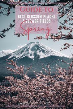 Spring Travel Guide to best blossom Places and colorful flowerfields worldwide. Where to see Cherry Blossom, Tulips, Poppies, bluebells? lightsinn | superbloom | blumenfeld | flowerfield | tulpen | california | kirschblüte | sakura | blossom | bloom | spring | frühling | easter travel | easter trends | blossom travel | spring travel | julija_makani | uk travel | poppies | peonies | japan travel | usa travel | bucket list | netherlands travel | lisse | keukenhof | tokio travel | #flowers… Japan Travel Guide, Asia Travel, Travel Usa, Travel Guides, Travel Deals, Travel Hacks, Travel Essentials, Train Travel, Budget Travel