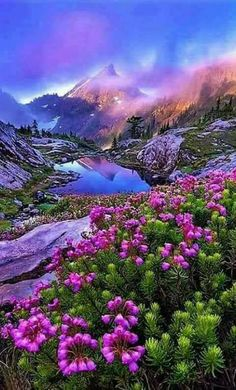 Mountain lake & flowers
