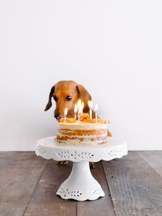 [Dog-Friendly] Peanut Butter Naked Cake Recipe for Birthday! — Fix Feast Flair (Butter Mochi Cake) Cool Birthday Cakes, Dog Birthday, Happy Birthday, Birthday Bash, Dog Cake Recipes, Dog Food Recipes, Scottish Terrier, Dog Friendly Cake, Dog Cakes
