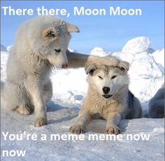 Moon Moon Wolf Meme | Moon Moon -Image #534,227