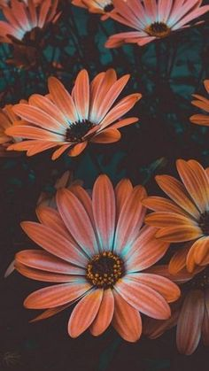 Wallpaper Flower, Sunflower Wallpaper, Flower Backgrounds, Wallpaper Backgrounds, Orange Wallpaper, Screen Wallpaper, Calming Backgrounds, System Wallpaper, Iphone Wallpapers