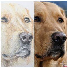 Original Art by Jill Aspin Oil Painting On Canvas, Watercolor Paintings, Original Art, Original Paintings, Ballet Art, Love Your Pet, Dog Portraits, Colored Pencils, Labrador Retriever