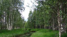 Syrjäjoella sijaitseva palstaa pidetään luonnoltaan monipuolisena, alueen metsä on lähes koskematonta. Keväällä 2012 alkaneella suokampanjalla on aiemmin suojeltu noin sata hehtaaria pohjalaisluontoa Alajärvellä ja Halsualla.