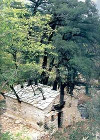 """17 trees growing on the roof of a church! * St: Theodora Church - Village """"Bata"""" in Arcadia - Greece Arcadia Greece, Saint Chapelle, Church Icon, Houses Of The Holy, Greek Culture, Old Churches, Kirchen, Our Lady, Catholic"""