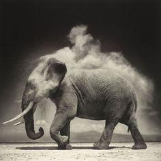Elephant - Nick Brandt