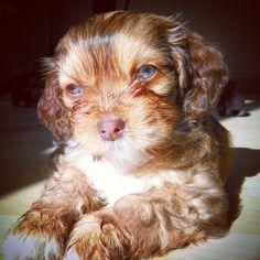 Puppy doll Uma #cachorro #puppy