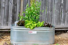DIY Water Trough Planter I use galvanized water troughs as raised planters in my vegetable gardens b Galvanized Water Trough, Galvanized Planters, Trough Planters, Raised Planter, Metal Water Trough, Bamboo Planter, Large Garden Planters, Diy Planters Outdoor, Garden Trellis