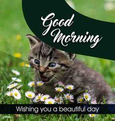 Cute Cat good morning image Beautiful Good Morning Wishes, Cute Good Morning Images, Good Morning Images Flowers, Latest Good Morning, Good Morning Gif, Morning Pictures, Good Morning Quotes, Inspirational Good Morning Messages, Good Morning Love Messages
