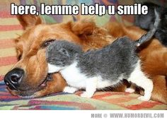 .   ...........click here to find out more     http://googydog.com ...We love our pets here at The Crossings! www.thecrossingsatap.com