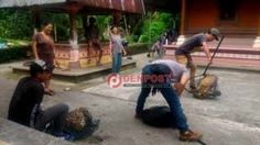 Di Badung, Kucing dan Monyet Juga Divaksin - http://denpostnews.com/2017/07/07/di-badung-kucing-dan-monyet-juga-divaksin/