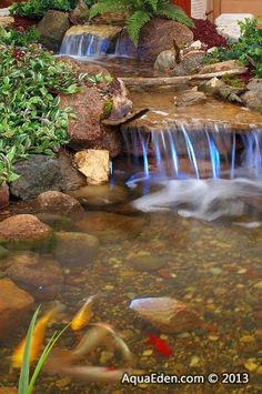 1000 images about goldfish ponds on pinterest goldfish for Best goldfish for outdoor pond