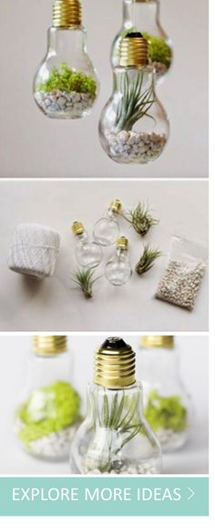 Lightbulb! Add a little green and lot of imagination to your home or garden with these succulents and DIY projects.