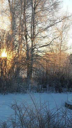 Talviaamun aurinko tammikuussa Jokirinteellä.
