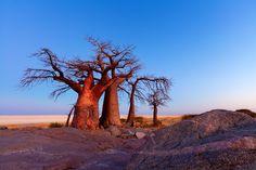 Landscape photo of the rocks and trees of Khubu Island in Botswana