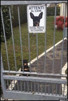 Rocky in azione 🤣😂🐶🐶 Funny Video Memes, Videos Funny, Super Funny, Funny Cute, Funny Images, Funny Photos, Funny Twilight, Funny Animals, Cute Animals