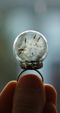 Real dandelion ring , dandelion seed jewelry