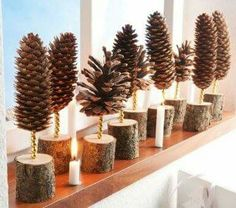 Pine cones trees in a row