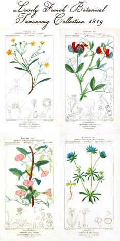 botanical print collection