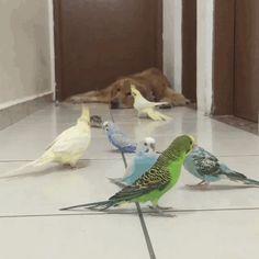 um-cachorro-oito-passarinhos-e-um-hamster-são-os-amigos-mais-incomuns-13