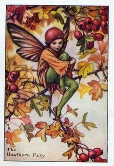 Hawthorn Flower Fairy » Flower Fairy Prints- Vintage Fairy Prints by Cicely Mary Barker for sale